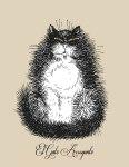 El Gato Arrogante